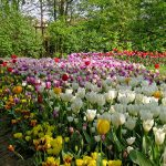 Il-parco-in-primavera-4