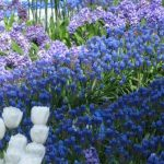 messer-tulipano_21-2