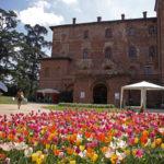 CASTELLO DI PRALORMO_Messer Tulipano 0h