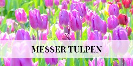 messer-tulipano-de