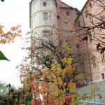 Il-Castello-in-autunno-3