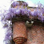 Il-Castello-in-primavera-1